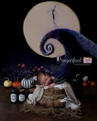 Belleville Newborn Photographer
